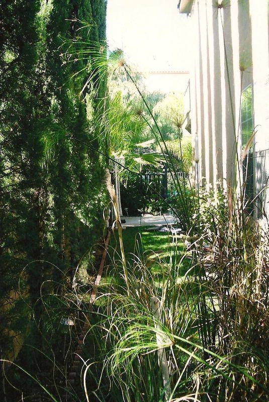 Side yard and greenery
