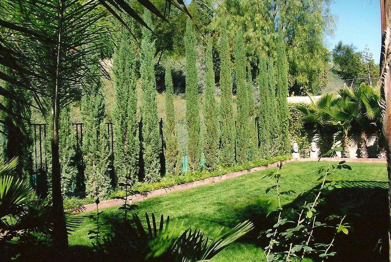 Back Yard Lawn